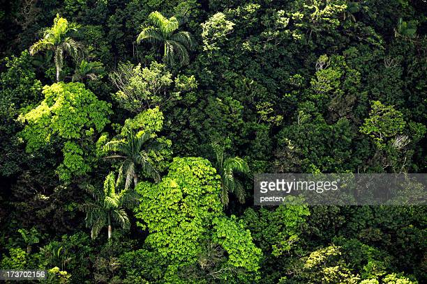 jungle textures