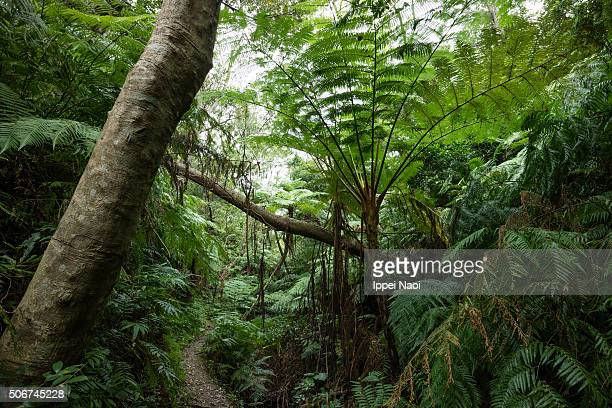 jungle trail with tropical tree ferns, okinawa, japan - ippei naoi stock photos and pictures