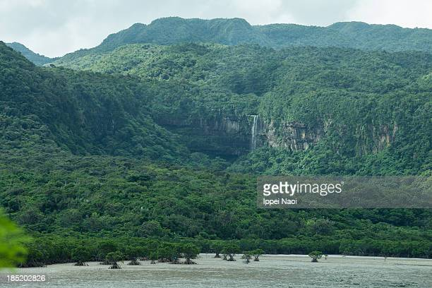 jungle waterfall and mangrove swamp, iriomote - ippei naoi stock photos and pictures