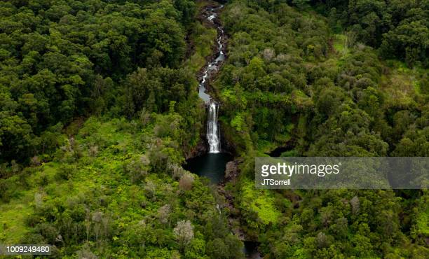 jungle waterfall - water fall hawaii stock pictures, royalty-free photos & images