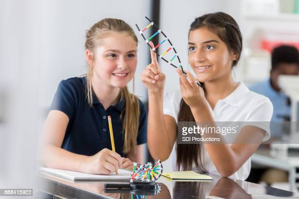 junior high school girls study dna helix model - stem stock photos and pictures