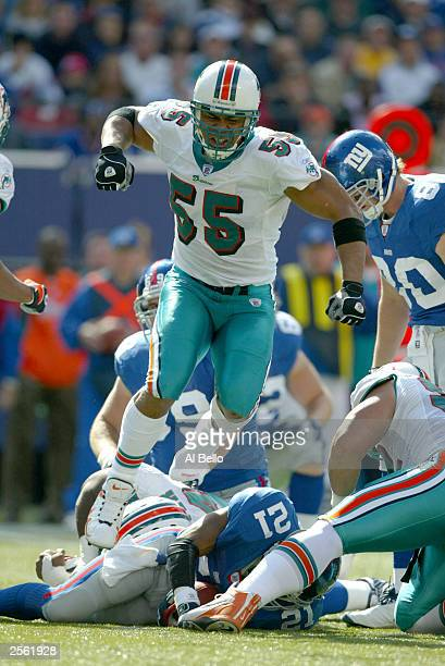 Junior Seau of the Miami Dolphins celebrates a tackle of Tiki Barber of the New York Giants during their game at Giants Stadium on October 5, 2003 in...