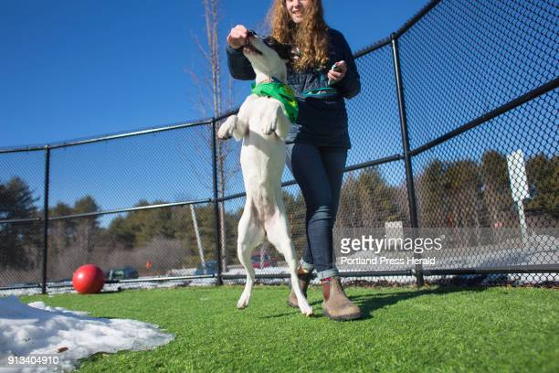 Juniper a 7monthold American Staffordshire terrier/American bulldog from Animal Refuge League will be competing in Puppy Bowl XIV on Sunday Elyana...