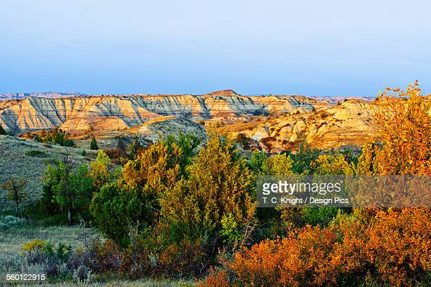 Juniper and canyons, Little Missouri Grasslands