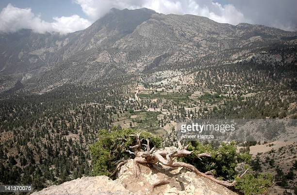 juniper forest of balochistan - ziarat stock pictures, royalty-free photos & images