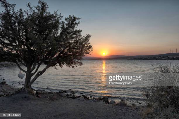 juniper tree at sifne bay in the summer in sifne. - emreturanphoto stock pictures, royalty-free photos & images