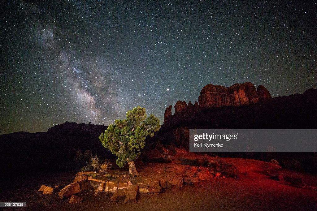 Juniper Under the Stars : Stock Photo
