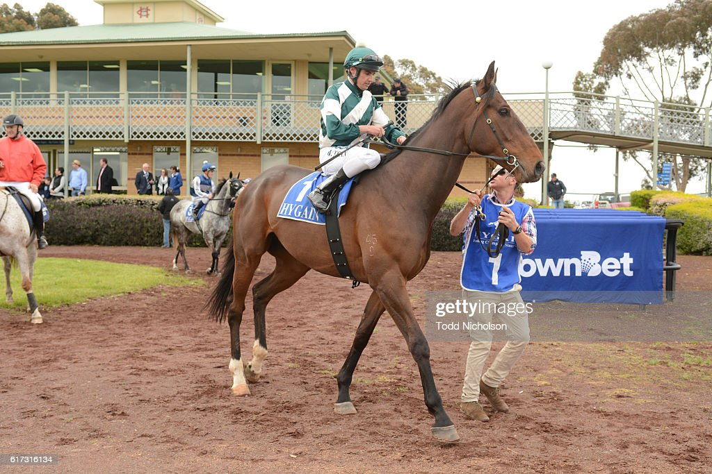 Junuh (NZ) ridden by Billy Egan goes out for Sinclair Wilson BM64 Handicap at Hamilton Racecourse on October 23, 2016 in Hamilton, Australia.