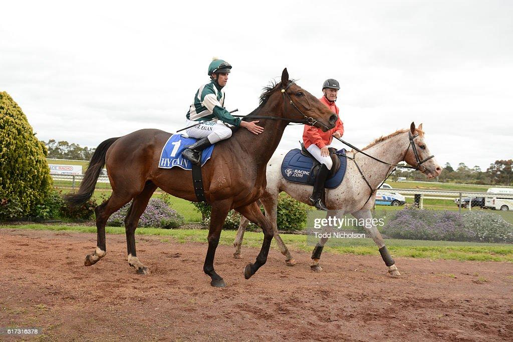 Junuh (NZ) ridden by Billy Egan returns after Sinclair Wilson BM64 Handicap at Hamilton Racecourse on October 23, 2016 in Hamilton, Australia.