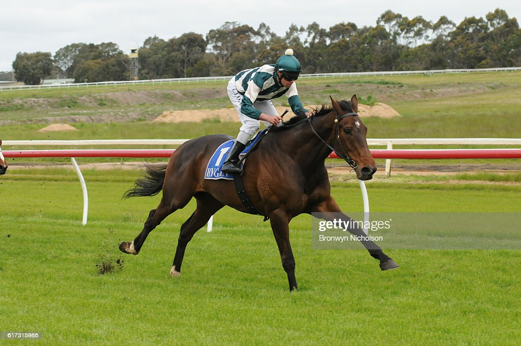 Junuh (NZ) ridden by Billy Egan wins Sinclair Wilson BM64 Handicap at Hamilton Racecourse on October 23, 2016 in Hamilton, Australia.