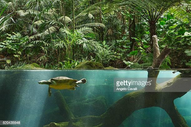 jurong bird park, singapore - jurong bird park stock pictures, royalty-free photos & images
