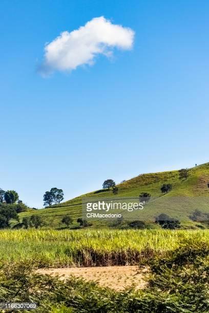 just a cloud in the sky over this beautiful sugar cane plantation. - crmacedonio - fotografias e filmes do acervo