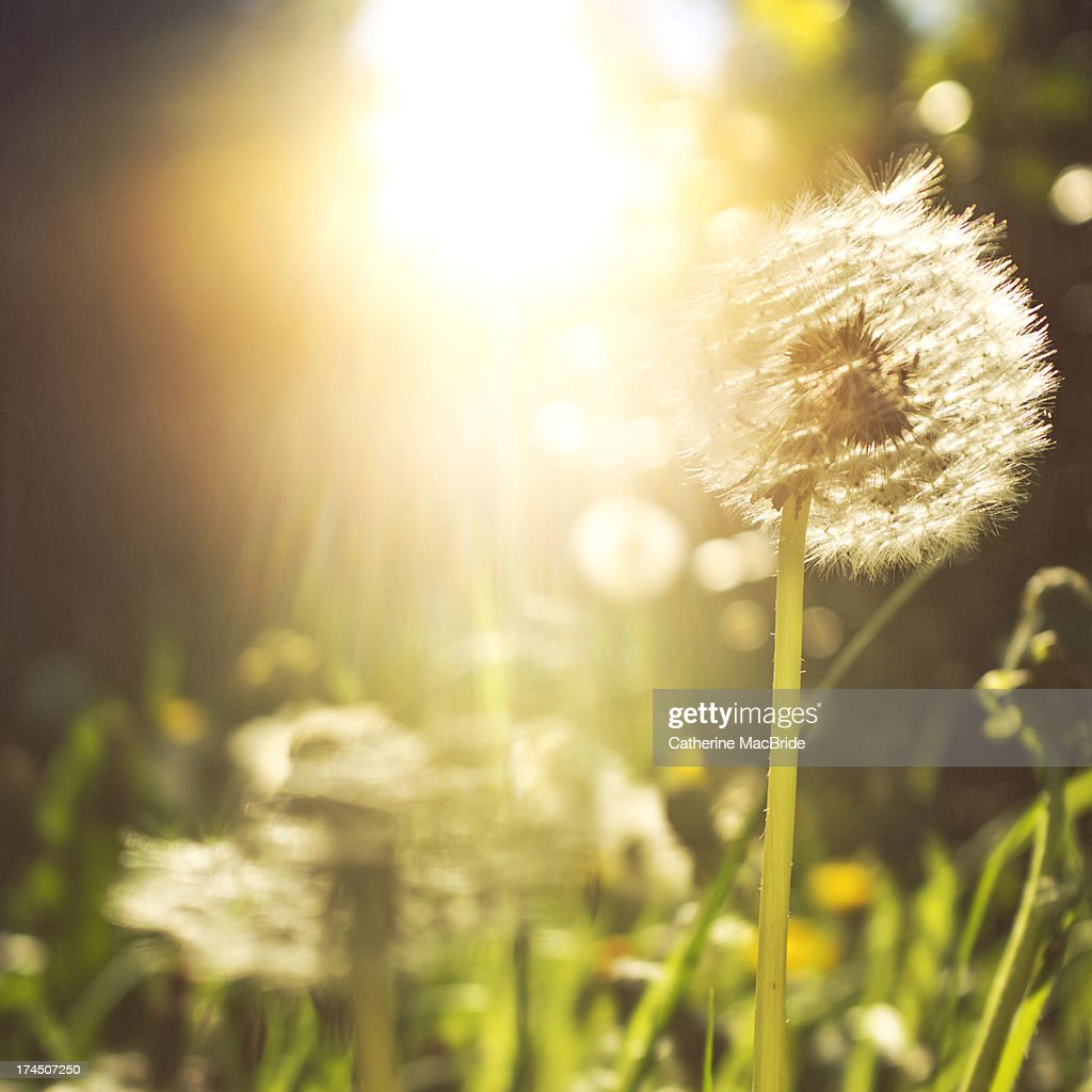 Just as the sun peeked through : Stock Photo
