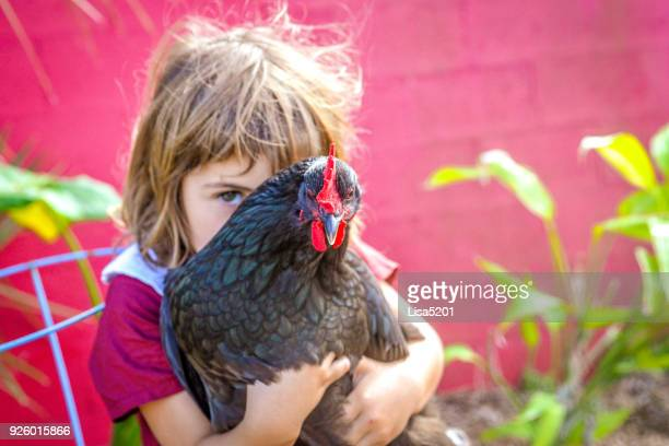 just me and a chicken - funny rooster stock photos and pictures