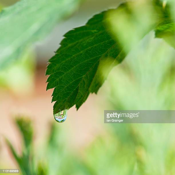 just one drop - ian grainger stock pictures, royalty-free photos & images