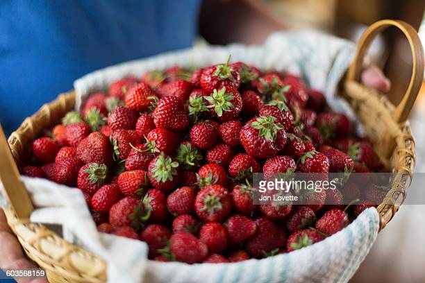 just picked spring strawberries - farm to table stock photos and pictures