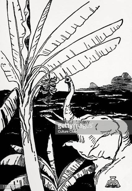 Just So Stories by Rudyard Kipling The Elephant's Child going to pull bananas off a bananatree after he had got his fine new long trunk Black and...