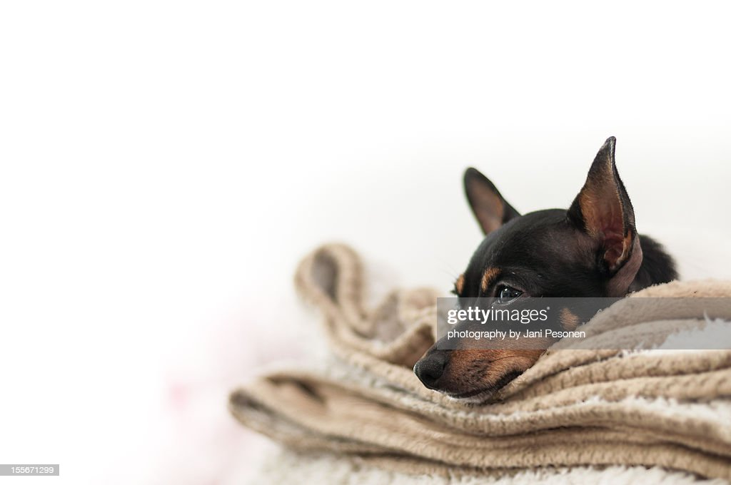 Just Tired : Stock Photo