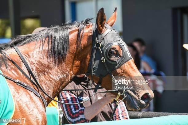 Justice Faith after winning Elusive Style Maiden Plate at Kyneton Racecourse on October 17 2017 in Kyneton Australia
