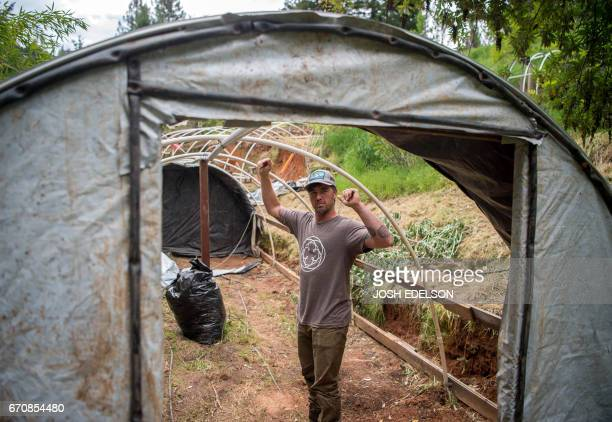 Justin Calvino tours a marijuana greenhouse under construction for the coming season at one of his properties in Mendocino County California on April...