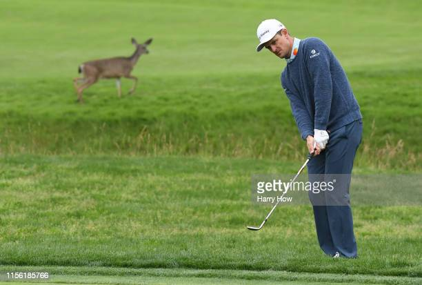 Justin Rose of England plays a shot on the 16th hole as a deer runs behind him during the third round of the 2019 U.S. Open at Pebble Beach Golf...