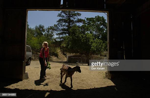 Justine Minot with Dork her 5 month old Nubian goat On this Trabuco Cyn ranch Justine is nursing Dork and two other goats survivors of a fire back to...