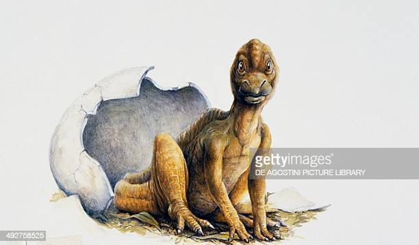 Juvenile Maiasaura hatched Hadrosauridae Late Cretaceous Illustration