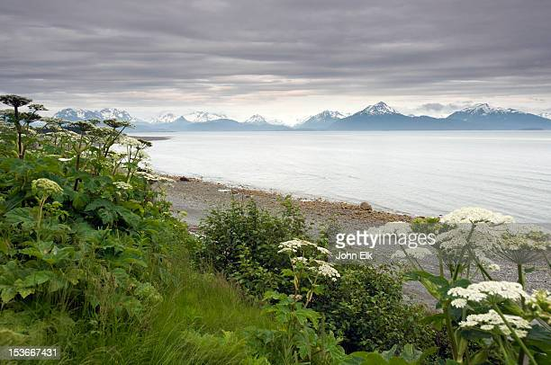 kachemak bay seascape - kachemak bay stock pictures, royalty-free photos & images
