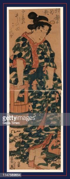 Kaga no Chiyojo, The maiden Chiyo from Kaga., Ikeda, Eisen, 1790-1848, artist, [between 1844 and 1848], 1 print : woodcut, color ; 33.1 x 21.2 cm ,...