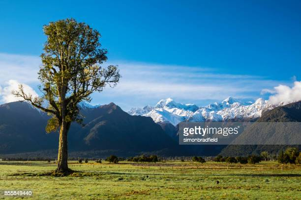 Kahikatea Tree And The Southern Alps