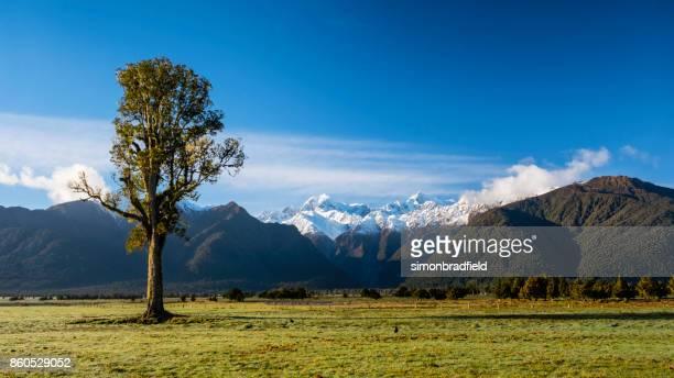 Kahikatea Tree And The Southern Alps