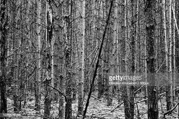 kahler wald - wald stock pictures, royalty-free photos & images