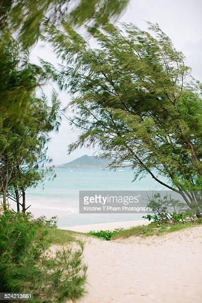 kailua - kailua beach stock photos and pictures