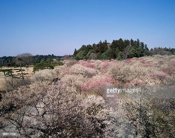 Kairaku-en, Mito, Ibaraki, Japan