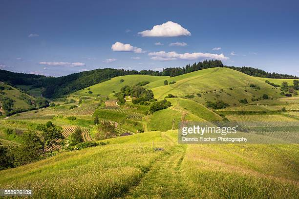 kaiserstuhl summer landscape - hill stock pictures, royalty-free photos & images