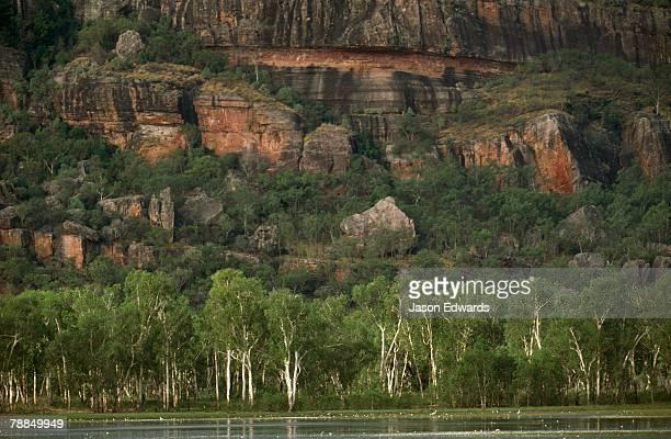 Egrets on a billabong lagoon beneath an ancient rock escarpment.