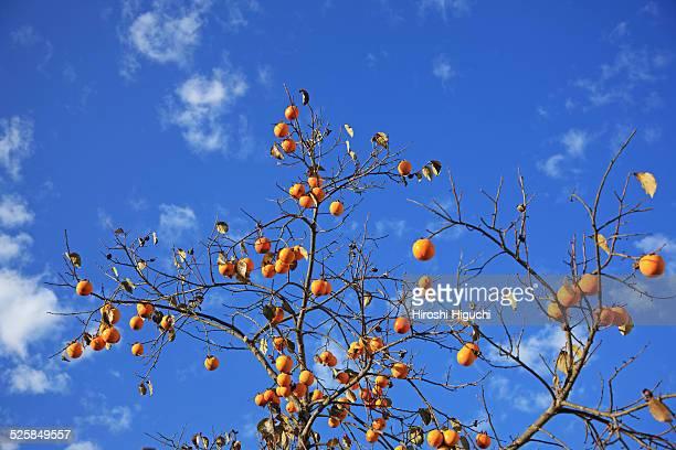 Kaki fruits