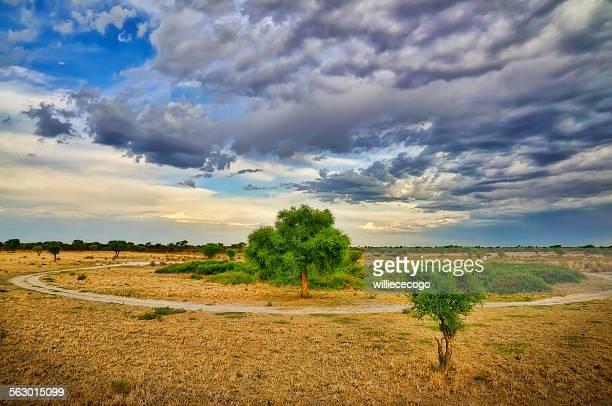 Kalahari greens