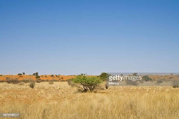 kalahari namibia prairie - mlenny stock-fotos und bilder