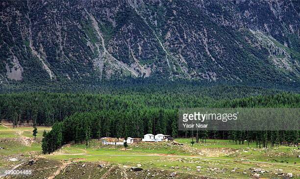 kalam forest - yasir nisar stock photos and pictures