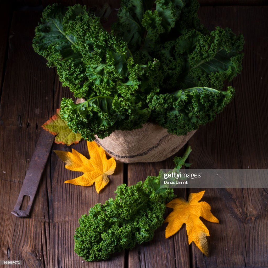 Kale Brassica oleracea : Stock Photo
