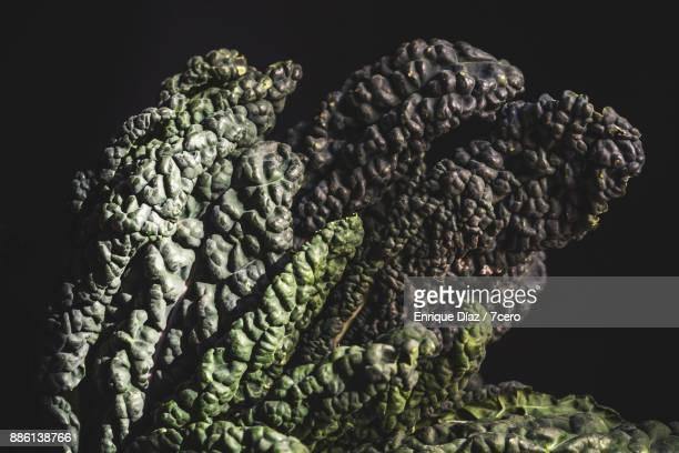 Kale Cavolo Nero in Sunlight