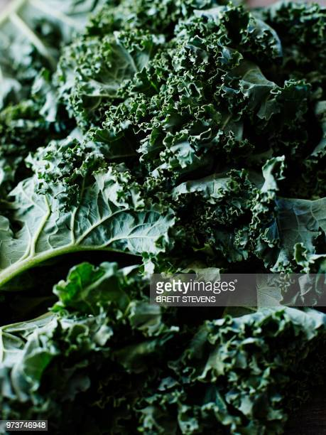 kale, close-up, full frame - kale stock photos and pictures