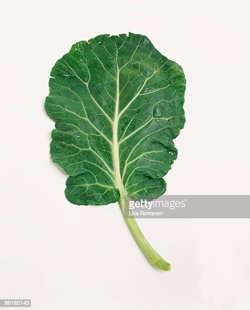 kale - kale stock photos and pictures