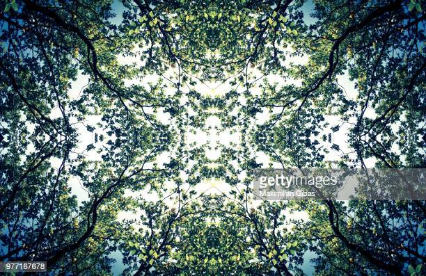Kaleidoscope effect of Bavarian Forest, Bavaria, Germany