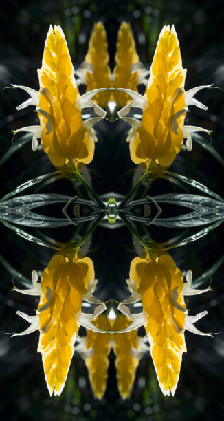 Kaleidoscope effect of Lollipop Plant or Golden Shrimp Plant