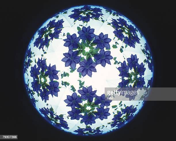 Kaleidoscope, Flower, Front View