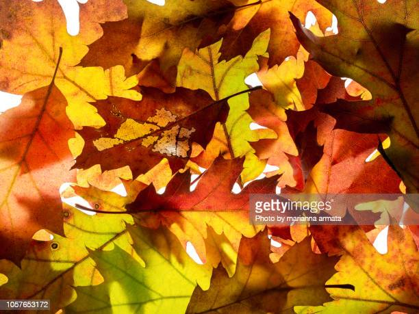 kaleidoscope of autumn leaves