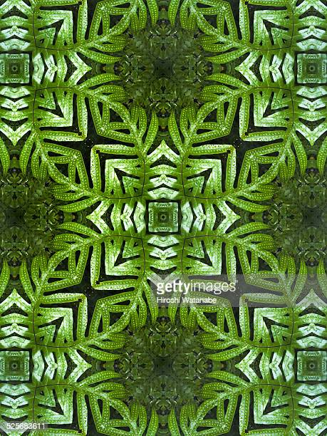 Kaleidoscope of tropical plant