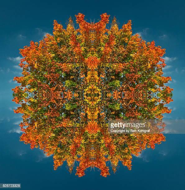 kaleidoscope - オータムインターナショナル ストックフォトと画像